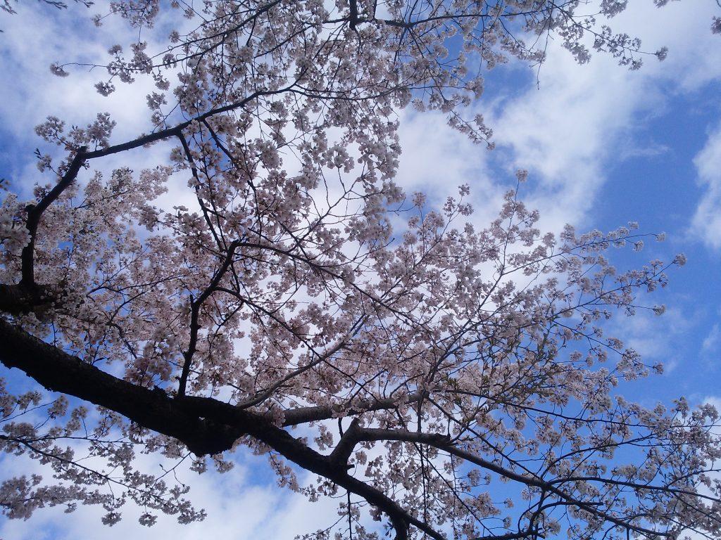 毎年恒例の遠出、今回は函館へ….